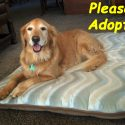 tanna-johnston-please-adopt
