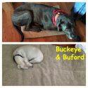 buckeye and buford south copy
