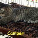 camper-swanson.jpg