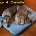 lucy-n-charlotte-fried_edited-1.jpg