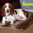 Bonnie-rogers-copy.jpg