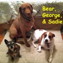 bear-george-and-sadie-mcdonald-copy.jpg