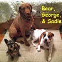 bear-george-and-sadie-mcdonald-copy.jpg