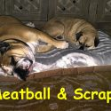 meatball-and-scrappy-salerno-copy.jpg
